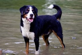 Cani e bambini: le 10 razze più adatte ai piccoli