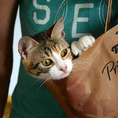 Gravidanza, toxoplasmosi e gatti: corro dei rischi?